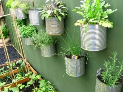 herbs-recycled-containers
