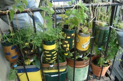 waste-tracking-wastetracking-recycle-gardening