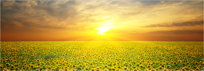 The-Power-of-Sunlight